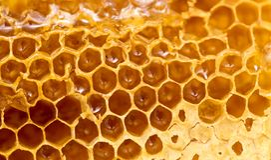 Miel frais dans le peigne Macro photographie stock libre de droits