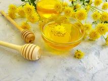 Miel frais doux, fleur jaune de chrysanthème sur le fond concret gris image libre de droits
