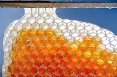 Miel frais en nids d'abeilles Photo stock