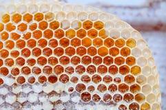 Miel frais en nids d'abeilles Image libre de droits