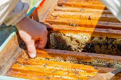 Miel fresca de la abeja del panal Foto de archivo