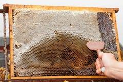 Miel fresca de la abeja del panal Imagen de archivo