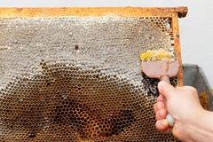 Miel fresca de la abeja del panal Fotografía de archivo libre de regalías
