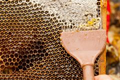 Miel fresca de la abeja del panal Fotografía de archivo