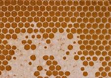Miel fresca de la abeja en fondo del modelo del panal Imagen de archivo