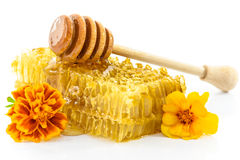 Miel fresca de la ligamaza Foto de archivo