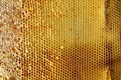 Miel fresca dulce en el marco sellado del peine Imagenes de archivo