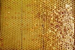 Miel fresca dulce en el marco sellado del peine Fotos de archivo libres de regalías