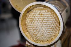 Miel fresca en el marco sellado del peine Foto de archivo
