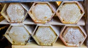Miel fresca en el marco sellado del peine Imagen de archivo libre de regalías