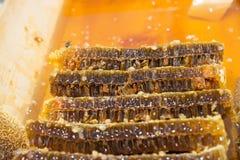 Miel fresca en el marco sellado del peine Foto de archivo libre de regalías