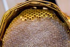 Miel fresca en el marco sellado del peine Fotos de archivo libres de regalías