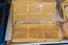Miel fresca en el marco sellado del peine Imagenes de archivo