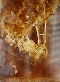 Miel fresca en el panal foto de archivo