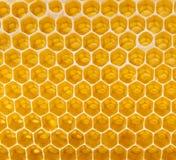Miel fresca en el peine Fotos de archivo libres de regalías