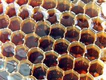 Miel fresca en el peine. Imagen de archivo libre de regalías