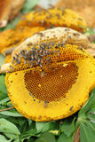 Miel fresca en el peine Fotos de archivo
