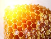 Miel fresca en panales Fotos de archivo libres de regalías