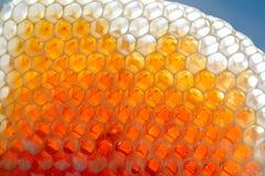 Miel fresca en panales Fotografía de archivo