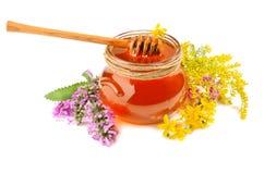 Miel fresca en tarro Imagen de archivo