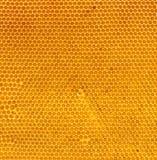 Miel fresca en textura natural del peine Fotografía de archivo libre de regalías