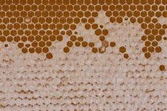Miel macra en modelo del panal con la cera en ella Imagen de archivo libre de regalías