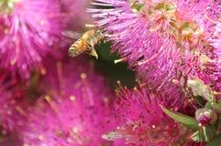 Miel mis en bouteille Photo libre de droits