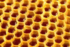 Miel orgánica en el peine - tiro ascendente cercano Imagen filtrada: efecto procesado cruz del vintage Imagen de archivo