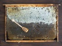Miel orgánica fresca del pueblo en panales con Fotos de archivo