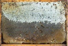 Miel orgánica fresca en panales, top del pueblo Imagenes de archivo