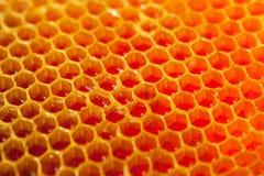 Miel orgánica fresca - tiro ascendente cercano Imagen de archivo