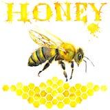 Miel, panal, abeja dulce watercolor Fotos de archivo