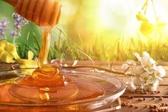 Miel que cae en el plato de cristal con el fondo de la naturaleza soleado Fotos de archivo