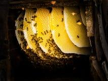Miel que cosecha en Sichuan rural China fotografía de archivo
