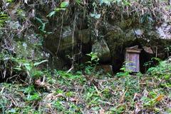 Miel sauvage bio, cultivé dans la jungle photos stock