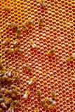 Miel y abejas Foto de archivo