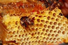 Miel y abejas frescas dulces Imágenes de archivo libres de regalías
