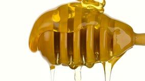 Miele che scorre giù da un merlo acquaiolo di legno del miele su fondo bianco archivi video