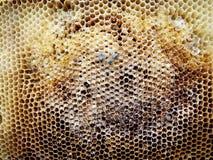 Miele dell'alveare Fotografie Stock