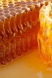 Miele e favo fotografia stock