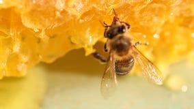 Miele e nettare della riunione dell'ape archivi video