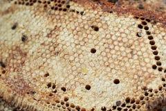 Miele in favo fresco Fotografie Stock