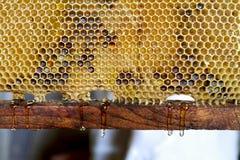 Miele fresco della sgocciolatura Fotografia Stock Libera da Diritti