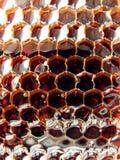 Miele fresco nel pettine. Immagini Stock