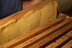 Miele fresco nella struttura del pettine fotografie stock