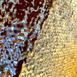 Miele naturale Fotografie Stock Libere da Diritti