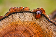 Miele su un albero del taglio Fotografia Stock