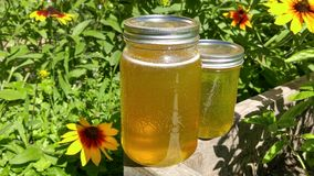 Miele in vasi di vetro Fotografia Stock Libera da Diritti