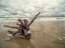 Miembro de árbol lavado en tierra Fotos de archivo libres de regalías