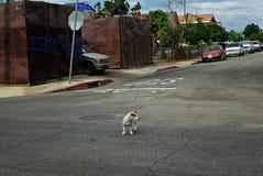 Miembro de la cuadrilla del chico duro que se coloca en el medio de la calle Fotografía de archivo libre de regalías